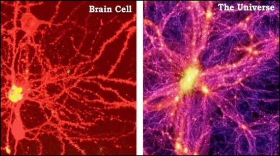 brain cell vs the universe