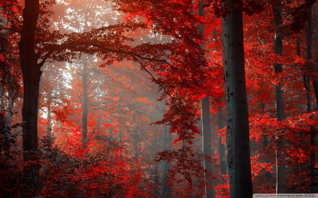 red_forest_2-wallpaper-1920x1200 (1)